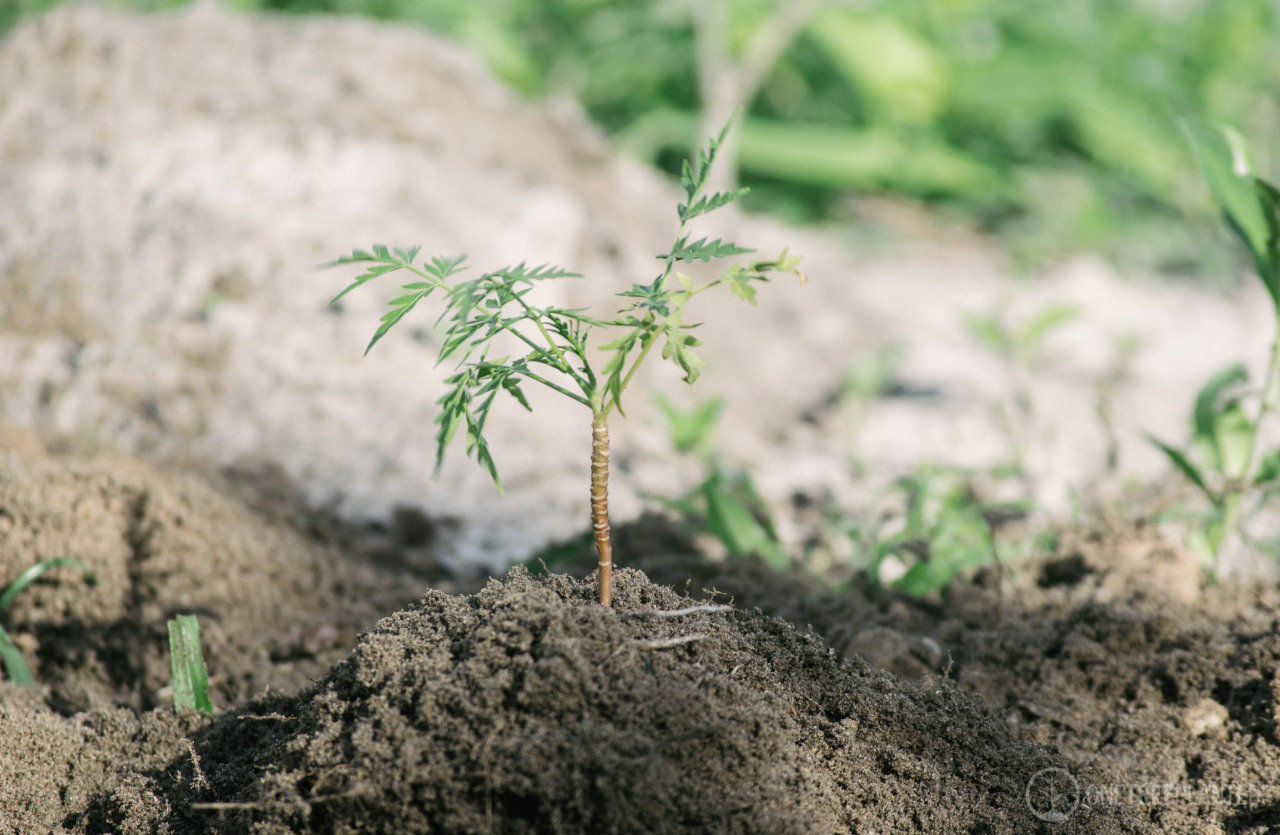 We pledge to plant 1 tree for every client demo completed
